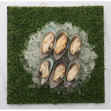 Green Mussels Half Shell (blanched cooked)