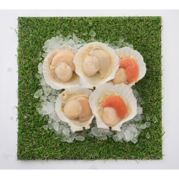 1/2 Shell Scallop Meat