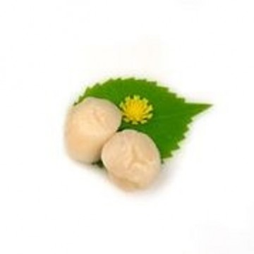US/Canada Scallop Meat