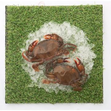 Frozen Soft-Shell Crab